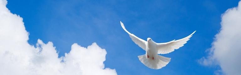 airco - duif
